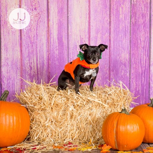 zoepumpkin-studio-dog-portrait-jjshotme